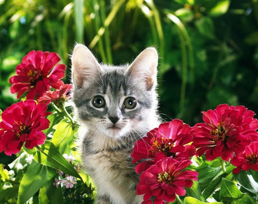 переселенцев леушино, картинки котята и цветы несколько
