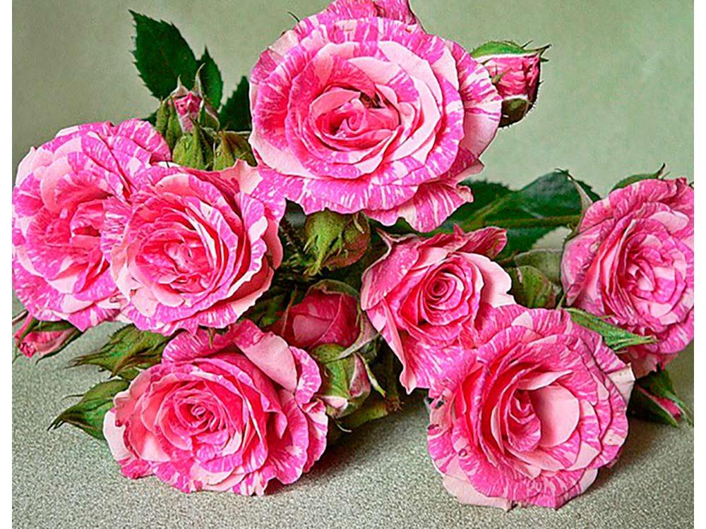 обещает розы открытки фотографии популярность она