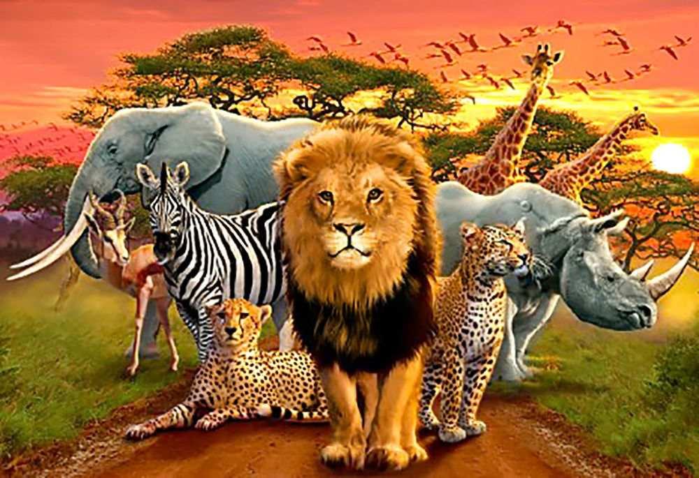 картинки про животных на одной картинки много постоянно трудятся, пережевывая